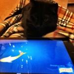 Een kleine maand met iPad