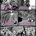 Dieren in zwart wit