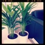 Plantjes kleuren de boel lekker op