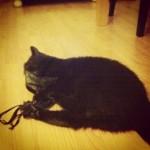 Poes en kattenkruid